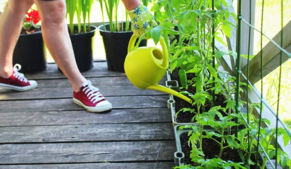 Caring For Your Garden Overview