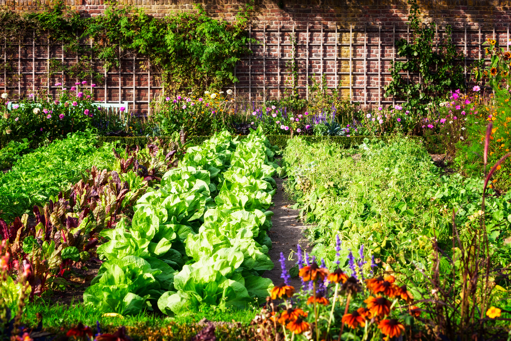 A Guide to Companion Planting for Your Vegetables