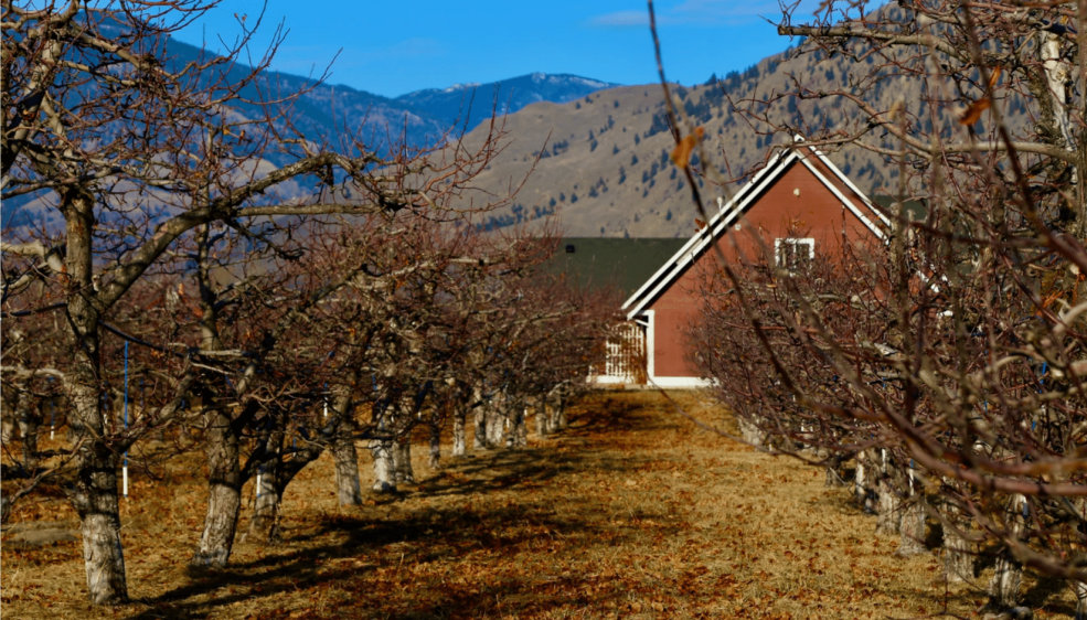 orchards on the brink of winter
